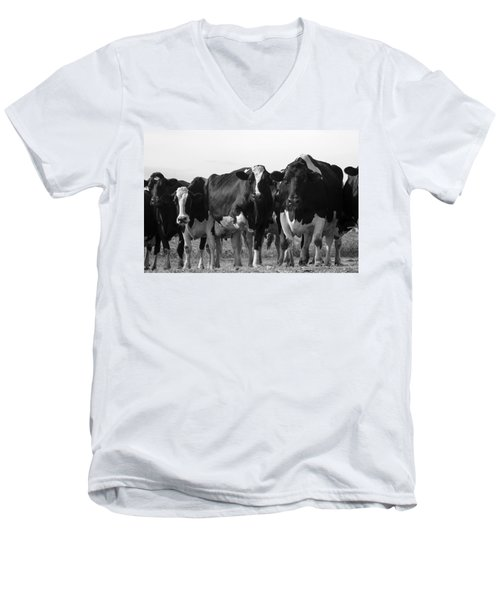 Curious Holsteins Men's V-Neck T-Shirt