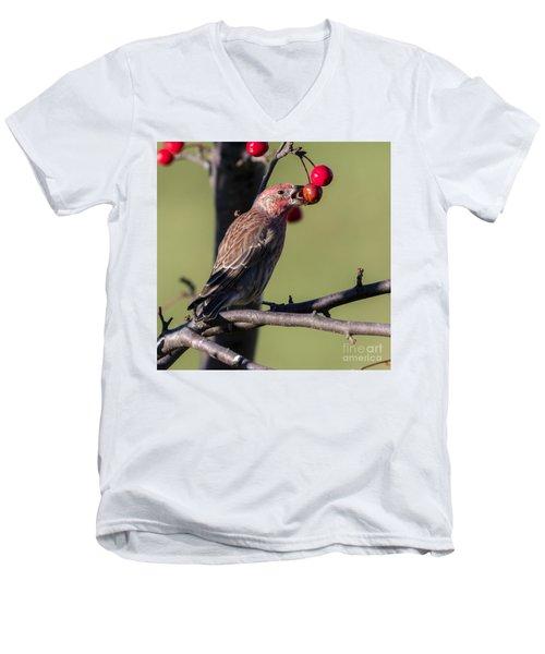 House Finch Vs Crabapple  Men's V-Neck T-Shirt