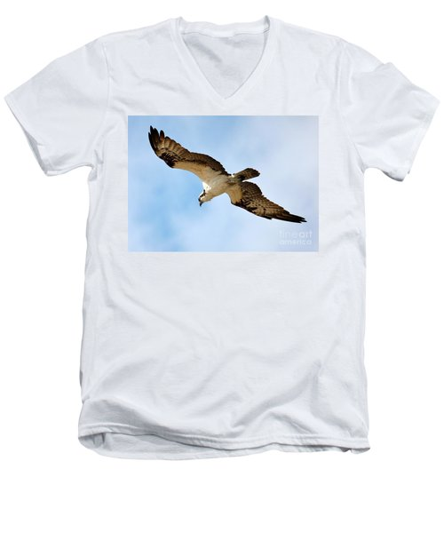 Hunter Osprey Men's V-Neck T-Shirt by Carol Groenen
