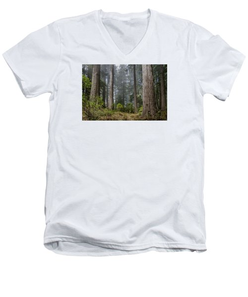 Into The Redwood Forest Men's V-Neck T-Shirt by Greg Nyquist
