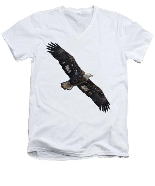 Isolated Juvenile American Bald Eagle 2016-1 Men's V-Neck T-Shirt