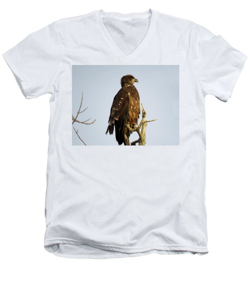 Juvenile Bald Eagle 1 Men's V-Neck T-Shirt