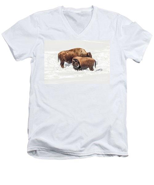 Juvenile Bison With Adult Bison Men's V-Neck T-Shirt