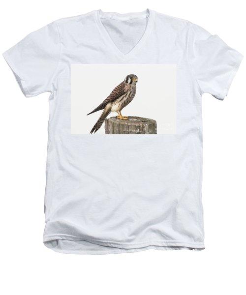Men's V-Neck T-Shirt featuring the photograph Kestrel Portrait by Robert Frederick