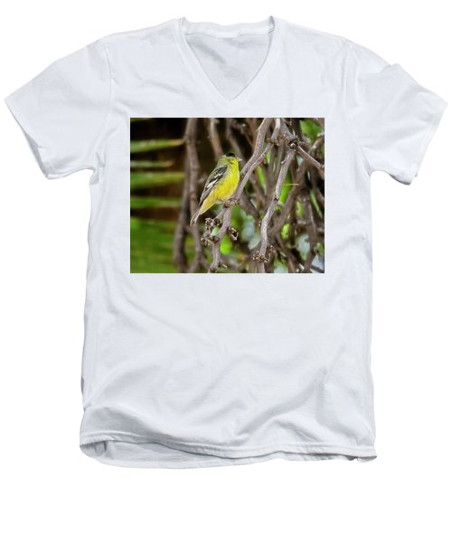 Men's V-Neck T-Shirt featuring the photograph Lesser Goldfinch H57 by Mark Myhaver