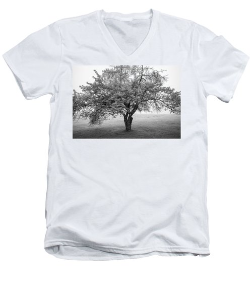 Men's V-Neck T-Shirt featuring the photograph Maine Apple Tree In Fog by Ranjay Mitra