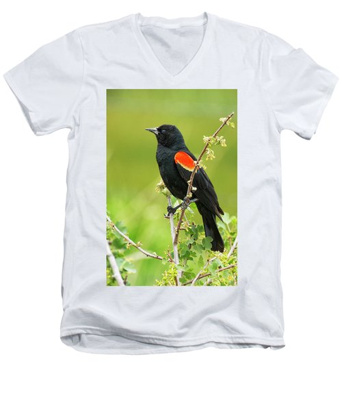 Male Red-winged Blackbird Men's V-Neck T-Shirt by Belinda Greb