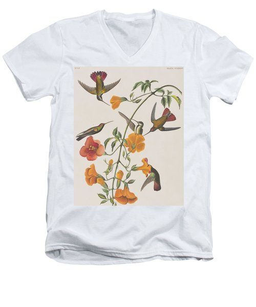 Mango Humming Bird Men's V-Neck T-Shirt by John James Audubon