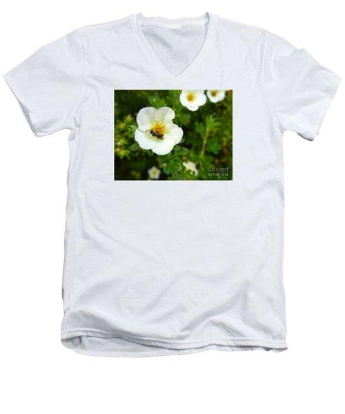 Massachusetts Carpenter Bee Men's V-Neck T-Shirt by KD Johnson