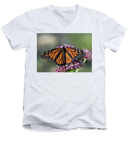 Monarch Butterfly Men's V-Neck T-Shirt by Stephen Flint