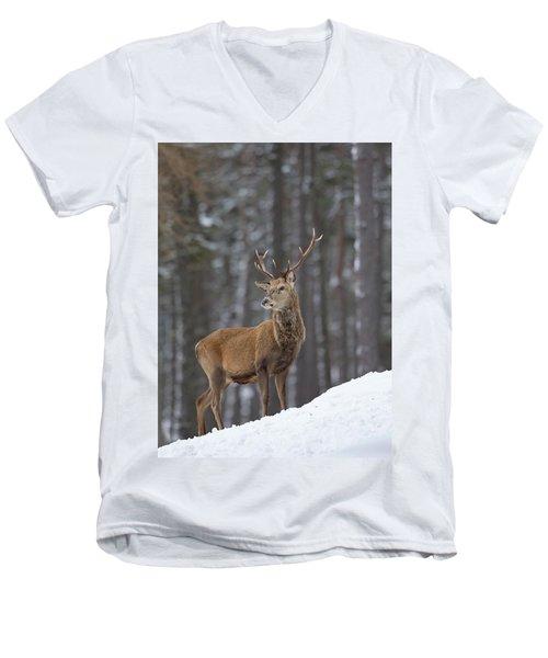 Monarch Of The Woods Men's V-Neck T-Shirt