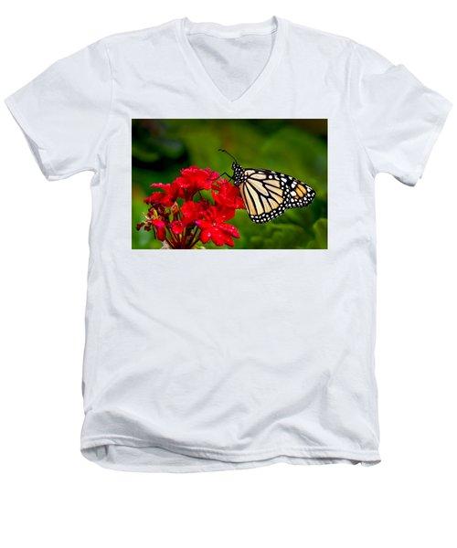 Monarh Butterfly Men's V-Neck T-Shirt