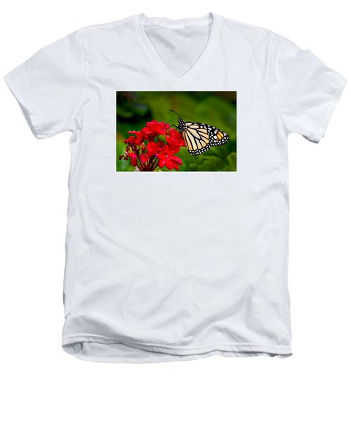 Monarh Butterfly Men's V-Neck T-Shirt