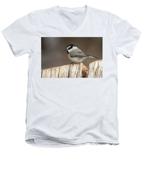 Mountain Chickadee Men's V-Neck T-Shirt