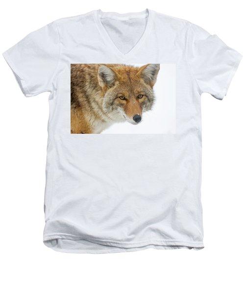 Mr. Coyote Men's V-Neck T-Shirt