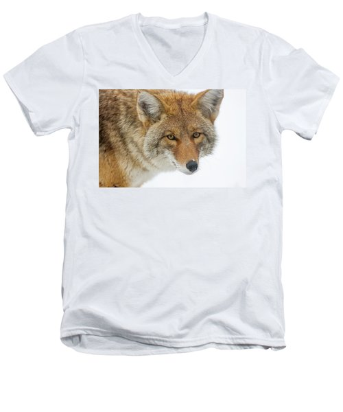 Mr. Coyote Men's V-Neck T-Shirt