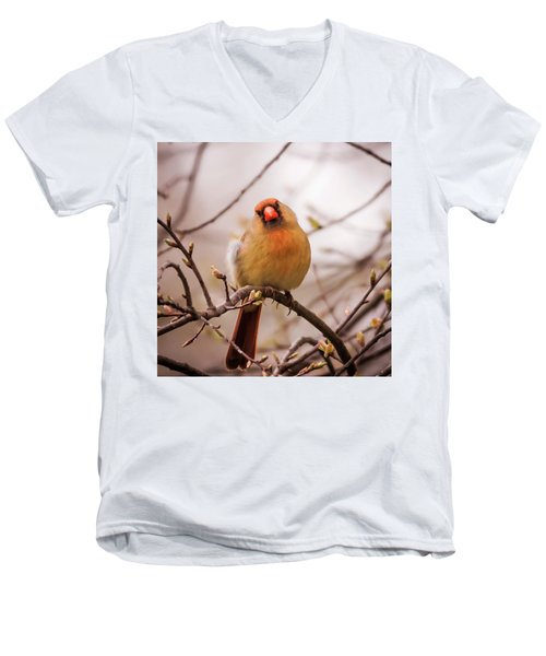 Men's V-Neck T-Shirt featuring the photograph Northern Female Cardinal Pose by Terry DeLuco