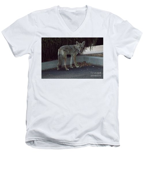 Men's V-Neck T-Shirt featuring the photograph On The Prowl 1 by Anne Rodkin