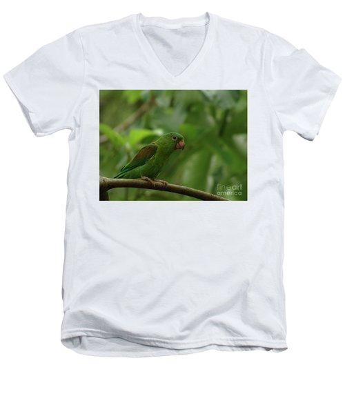 Orange-chinned Parakeet  Men's V-Neck T-Shirt