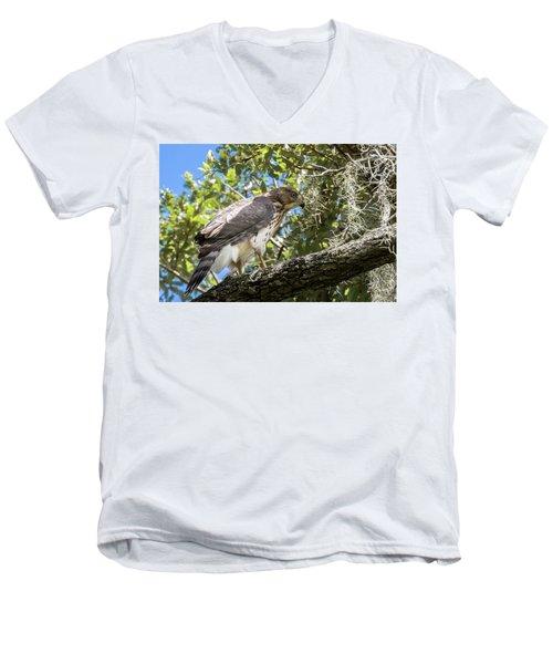 Red-shouldered Hawk Fledgling - 4 Men's V-Neck T-Shirt