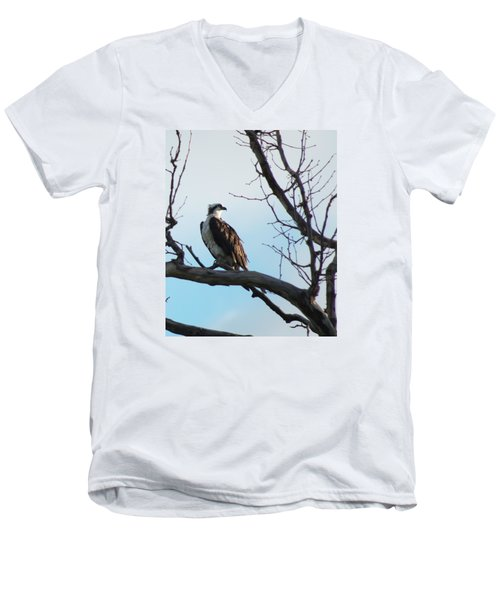 Osprey In Tree Men's V-Neck T-Shirt