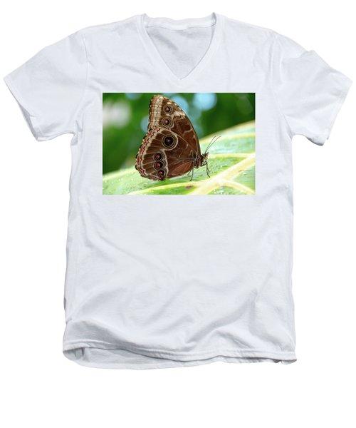 Owl Butterfly Men's V-Neck T-Shirt