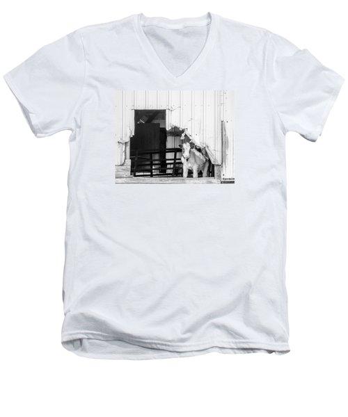 Men's V-Neck T-Shirt featuring the photograph Peak-a-boo Calf by Dan Traun