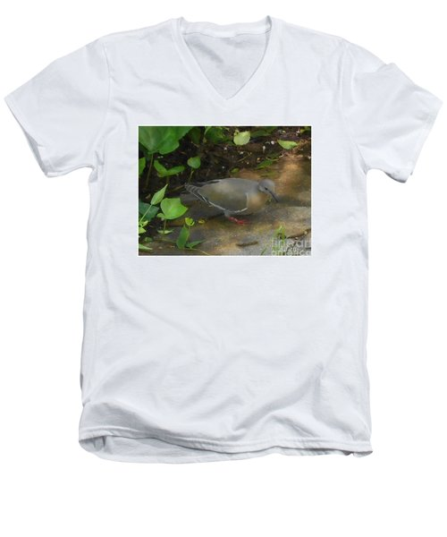 Pigeon Men's V-Neck T-Shirt by Felipe Adan Lerma