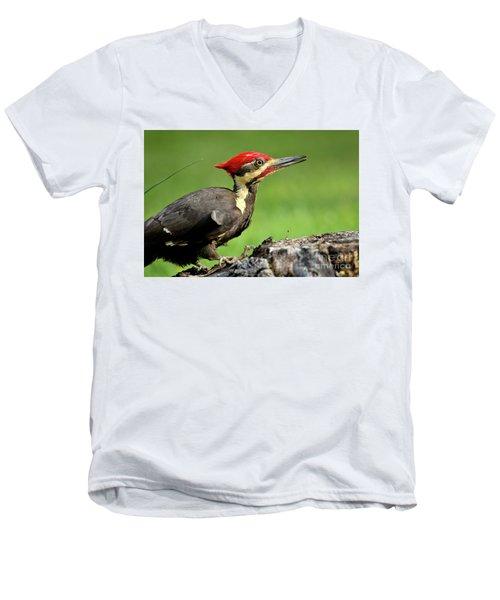 Pileated 2 Men's V-Neck T-Shirt by Douglas Stucky