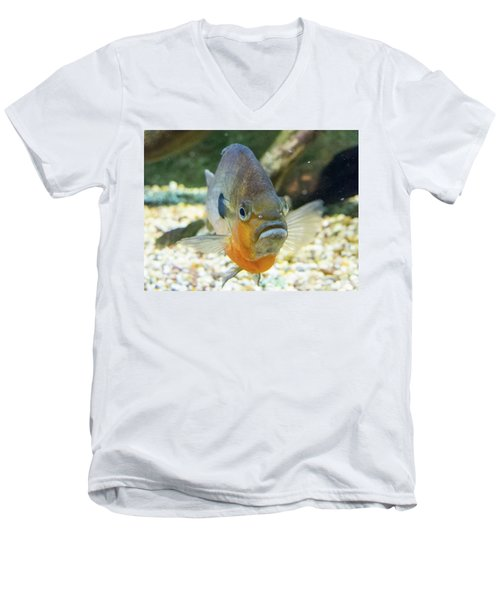 Piranha Behind Glass Men's V-Neck T-Shirt