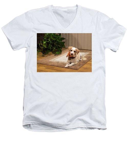 Portrait Of A Dog Men's V-Neck T-Shirt