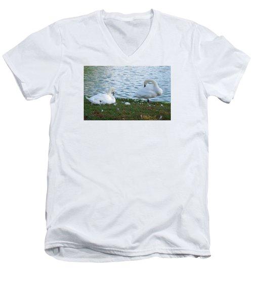 Preening Swans Men's V-Neck T-Shirt