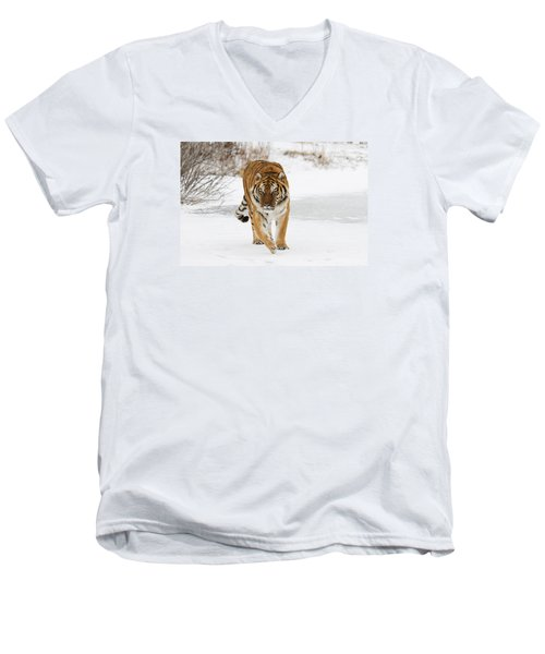 Prowling Tiger Men's V-Neck T-Shirt