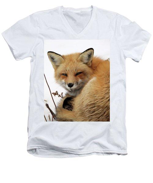 Red Fox In Snow Men's V-Neck T-Shirt