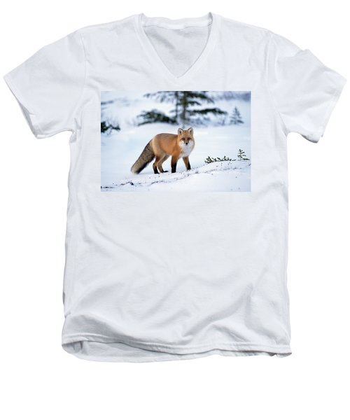 Red Fox Vulpes Vulpes Portrait Men's V-Neck T-Shirt