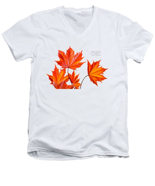 Red Maple Men's V-Neck T-Shirt by Christina Rollo