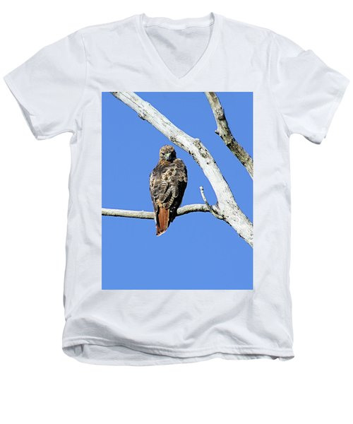 Red Tail Hawk Men's V-Neck T-Shirt