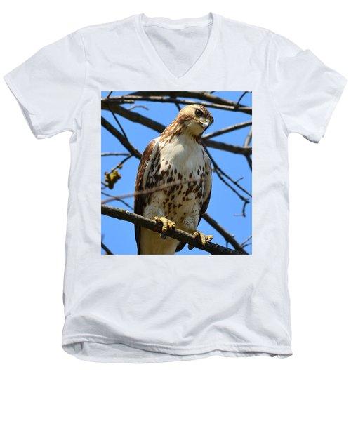 Red-tailed Hawk Men's V-Neck T-Shirt