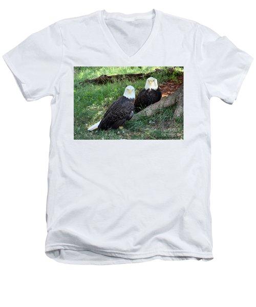 Resting Bald Eagles Men's V-Neck T-Shirt
