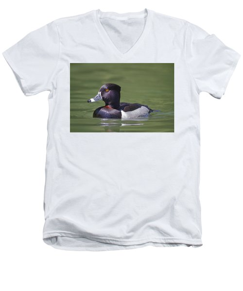 Ring-necked Duck Profile Men's V-Neck T-Shirt