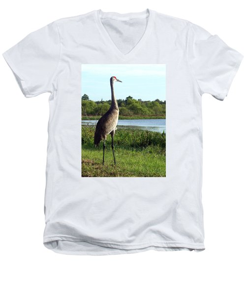 Sandhill Crane 019 Men's V-Neck T-Shirt