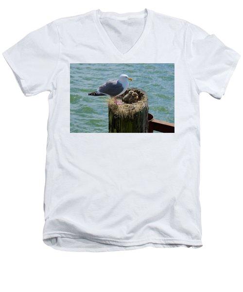 Seagull Family Men's V-Neck T-Shirt by Richard J Cassato