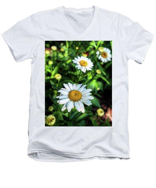 Shasta Daisy Men's V-Neck T-Shirt by Robert FERD Frank