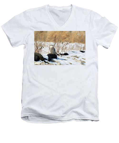 Sitting Snowy Men's V-Neck T-Shirt