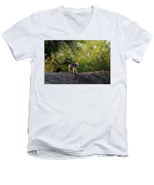 Sleepy Coyote Men's V-Neck T-Shirt