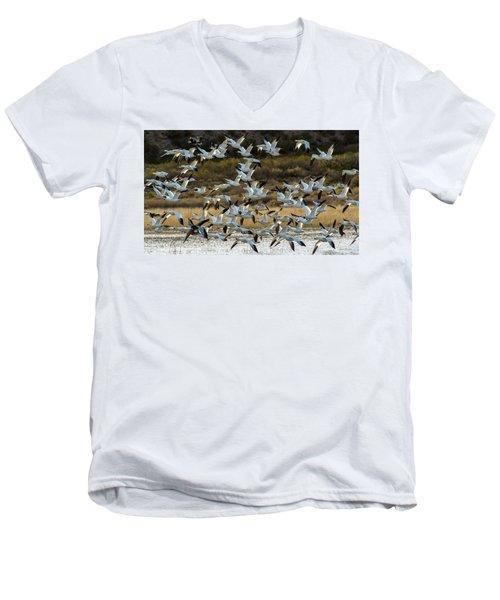Snow Geese Flock In Flight Men's V-Neck T-Shirt