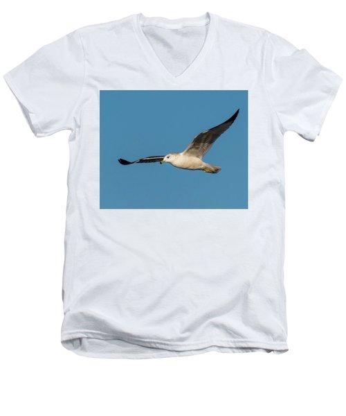 Soaring Gull Men's V-Neck T-Shirt