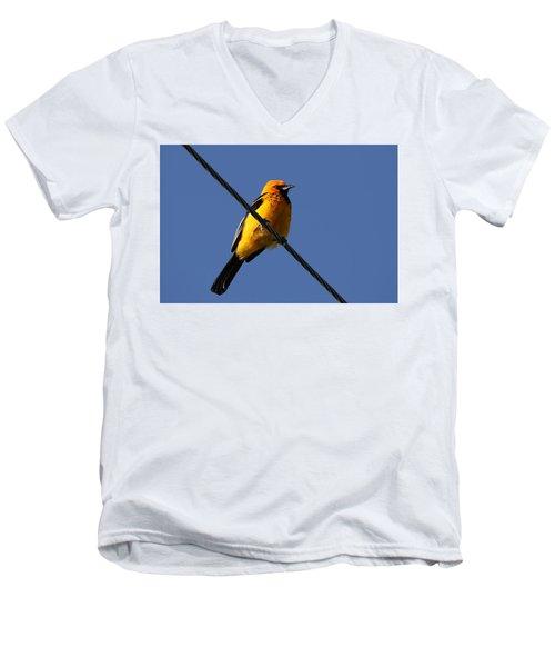 Spot Breasted Oriole Men's V-Neck T-Shirt