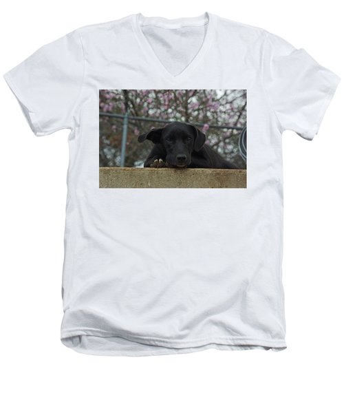 Springtime Independence Men's V-Neck T-Shirt