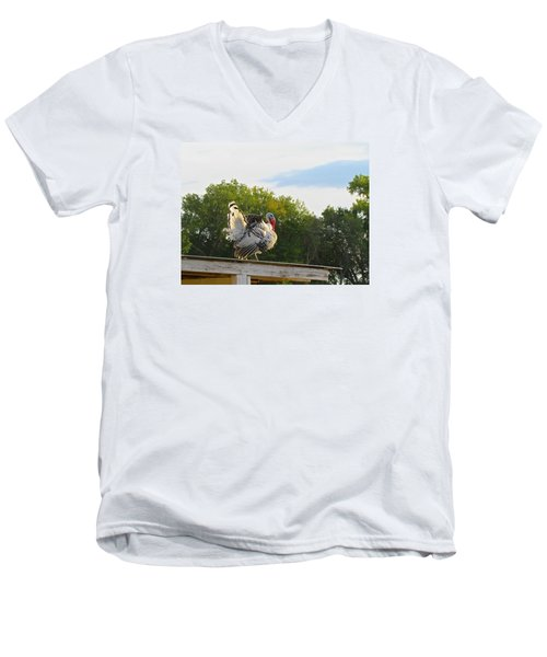 Men's V-Neck T-Shirt featuring the photograph Strutting His Stuff by Brenda Pressnall